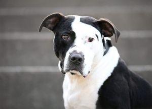 Dogs For Adoption Near East Lansing Mi Petfinder