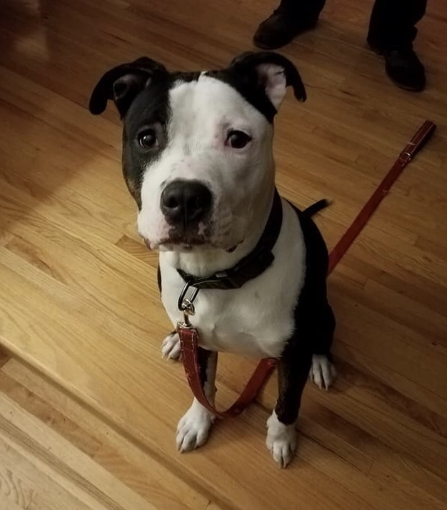 Chance *Dog of the Month* 1