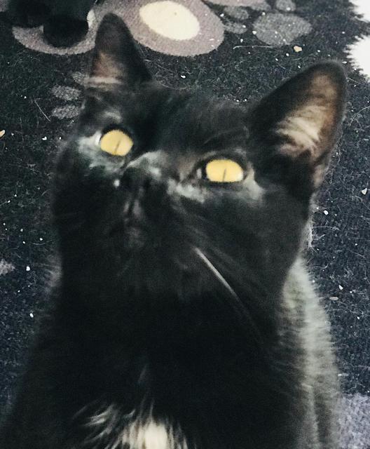 Blackie 2