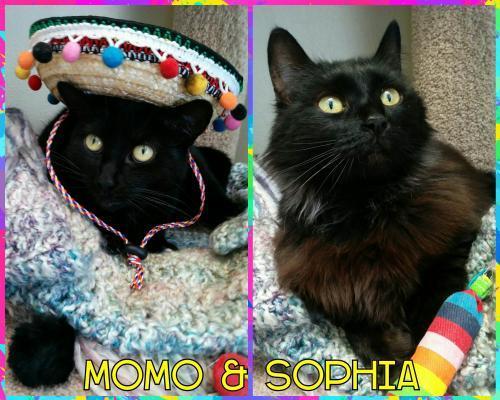 Sophia & Momo