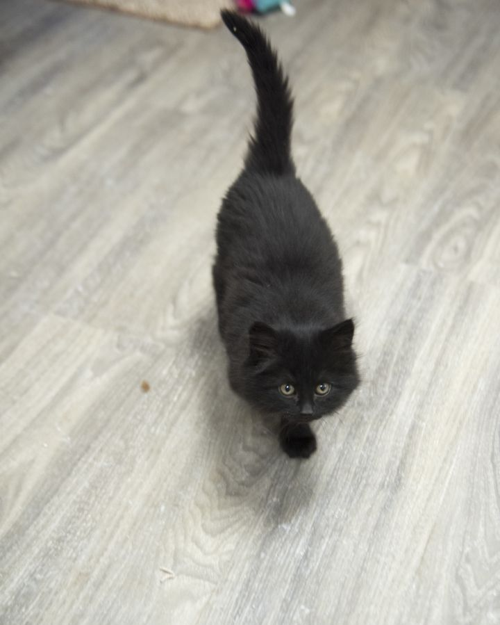 3 Black Kittens 2
