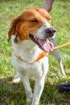 Hound Dog: Dusty