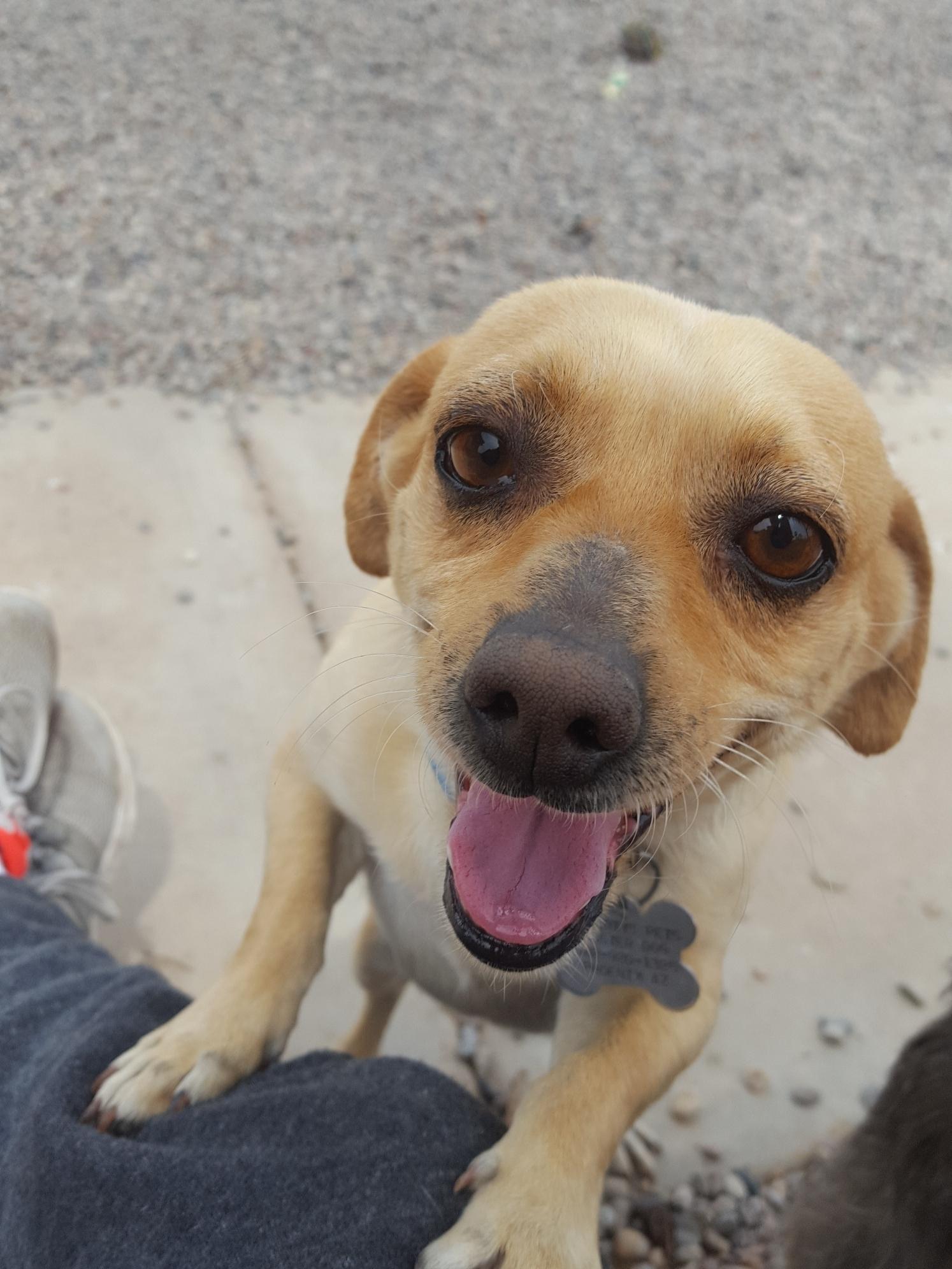 Dog for Adoption – Sonny  | Cairn Terrier Puppies Phoenix Az