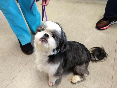 Dog For Adoption Kentucky Karl Near Newport Ky Petfinder