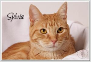 Thank you for checking out our wonderful animals available for adoption Please let us know if you d