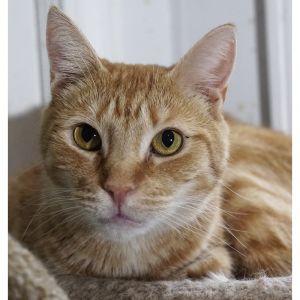 Sylvia Tabby Cat