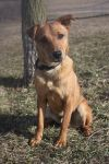 Terrier Dog: Grady
