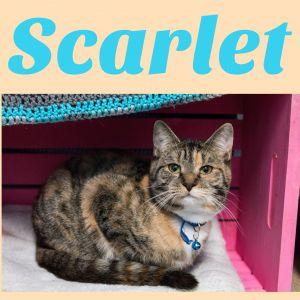 . Scarlet .