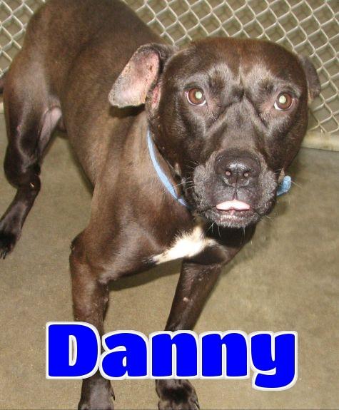 #3047 Danny -sponsored