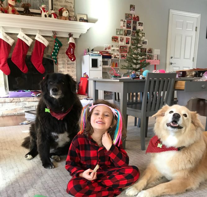 Abby & Lily - OWNER DIED