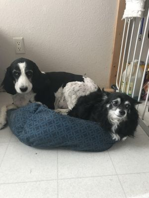 ***COURTESY LISTING***Lily and Harley