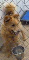 Golden Retriever Dog: 53673 Chester sponsored $40