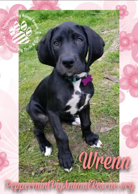 Wrenn ADOPTION PENDING
