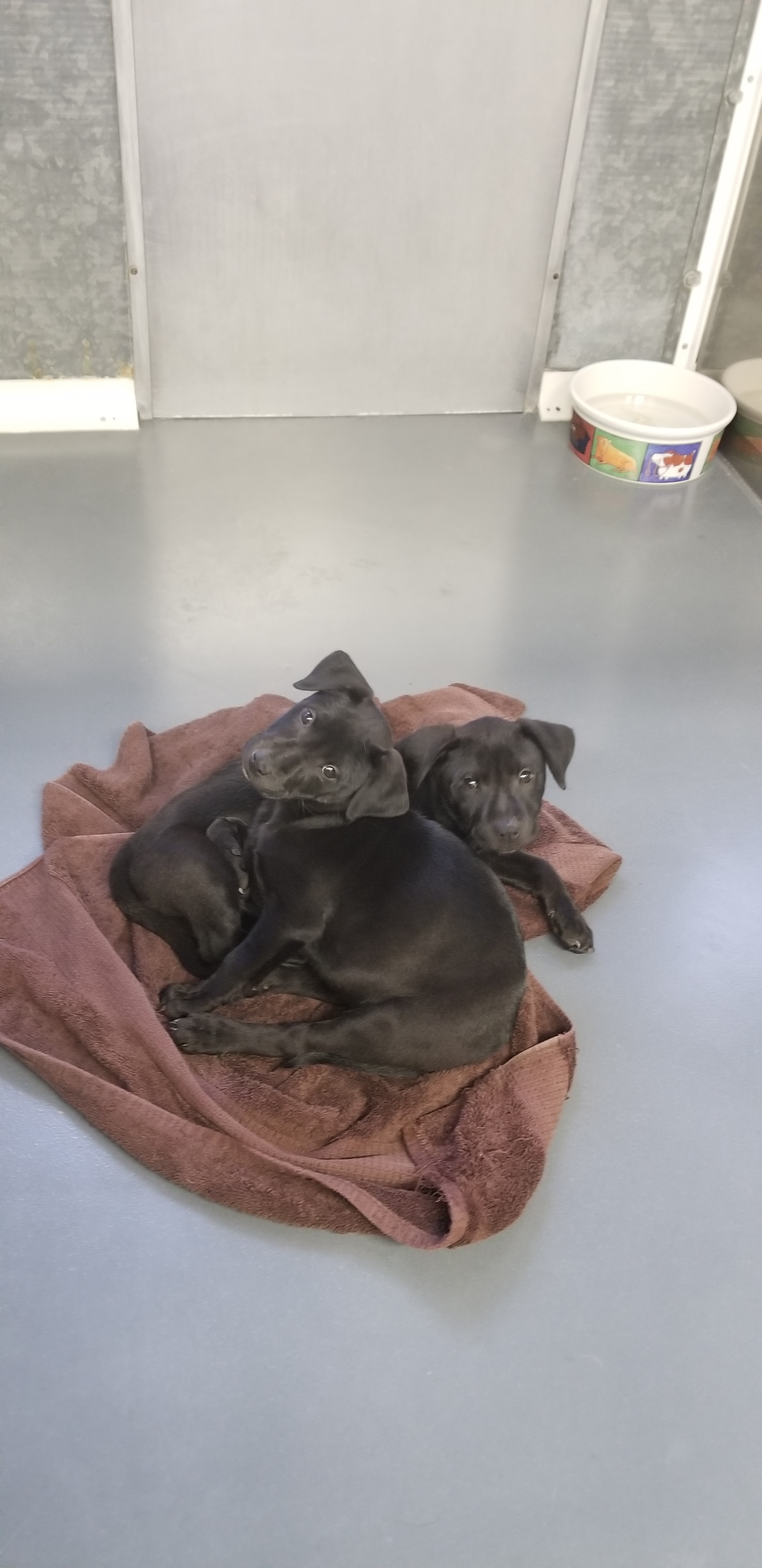 8 puppies F & M 3