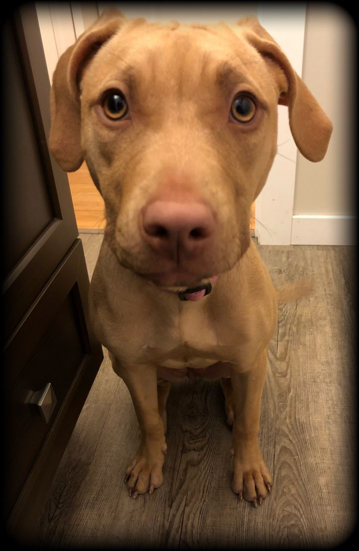 Misha *Dog of the Month* 5