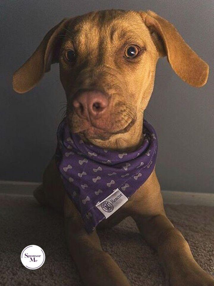 Misha *Dog of the Month* 4