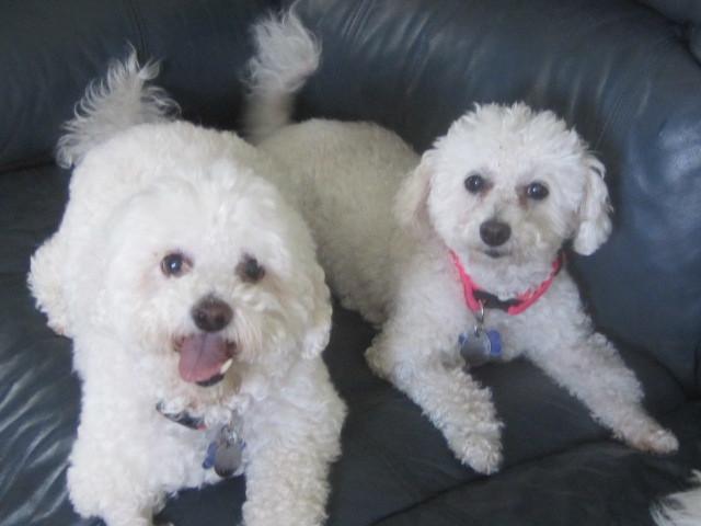 Sammy and Suzette!