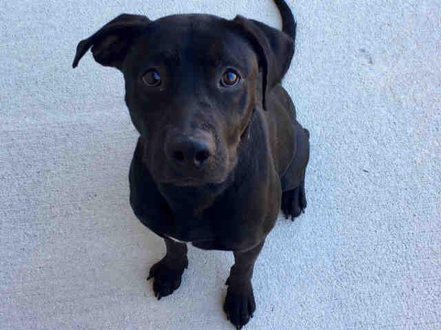 Dog for Adoption – DIPPER near Jacksonville FL