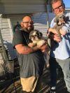 Shih Tzu Dog: Macky - In Foster In Rocky Mount, NC