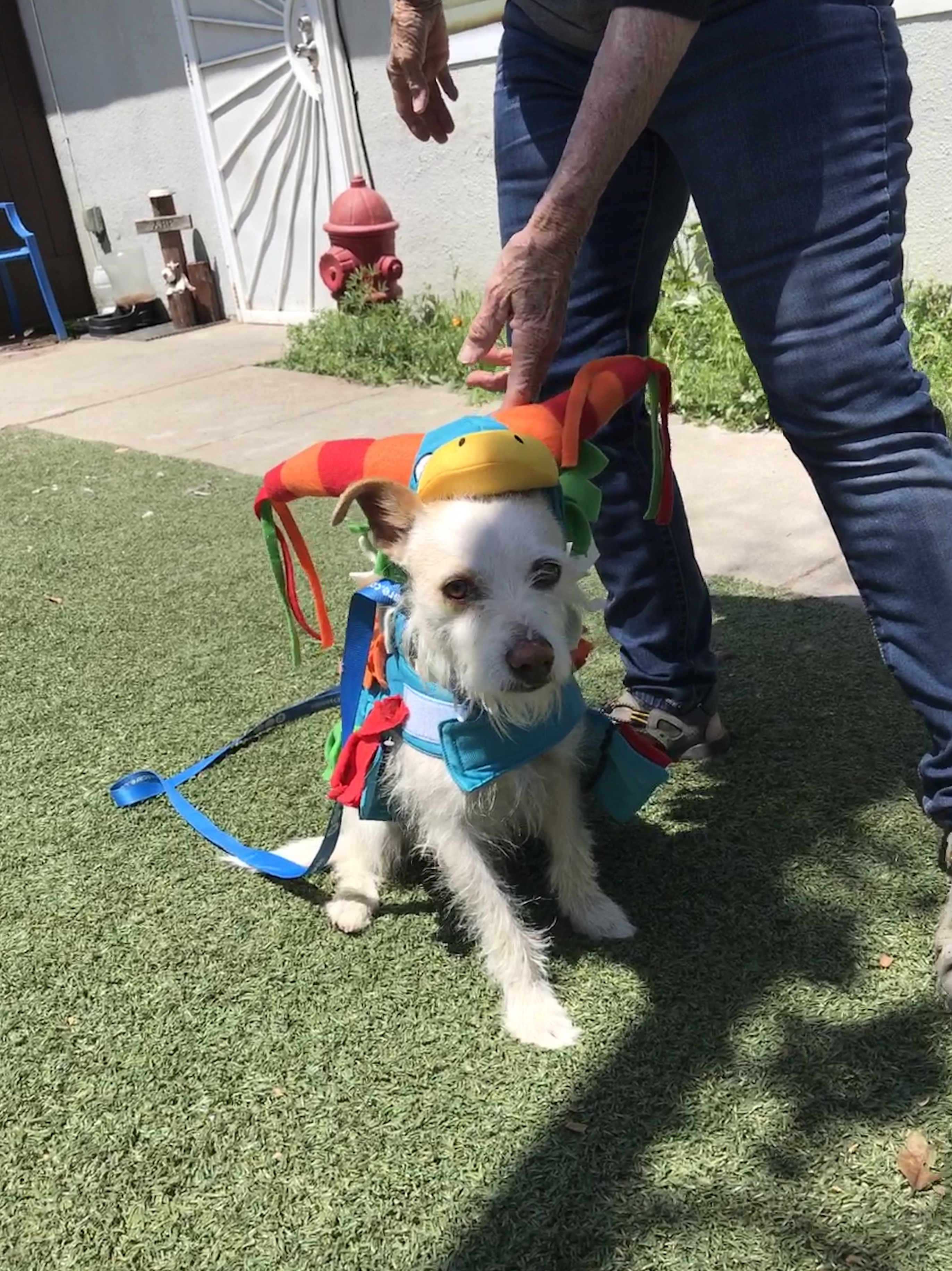 Dog For Adoption Maya A Terrier Mix In Fresno Ca Petfinder