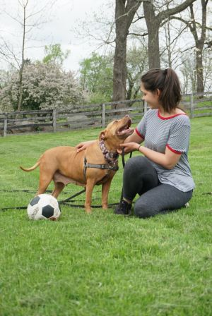 Mona-Mona the joyful, big grin mush Terrier Dog