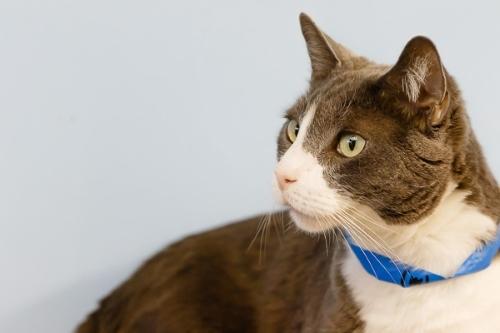 Cat for Adoption – Smoki, near Oakland Park, FL | Petfinder