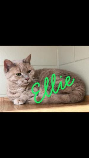 Ellie! Colony Cat!