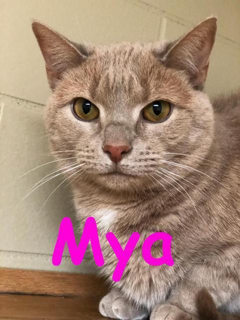 Mya! Colony Cat!