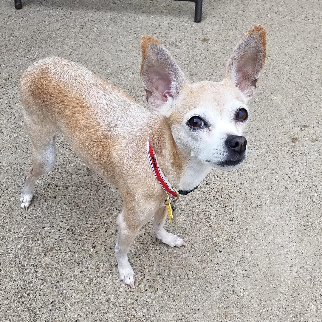 Dog for Adoption – Cocoa, near Dallas, TX   Petfinder