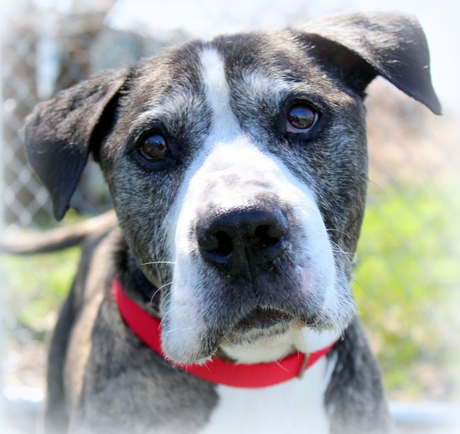 Checca (Active Senior Gentleman, Good with Older Kids & Dogs)