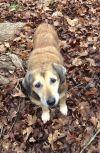 Shepherd Dog: Clover