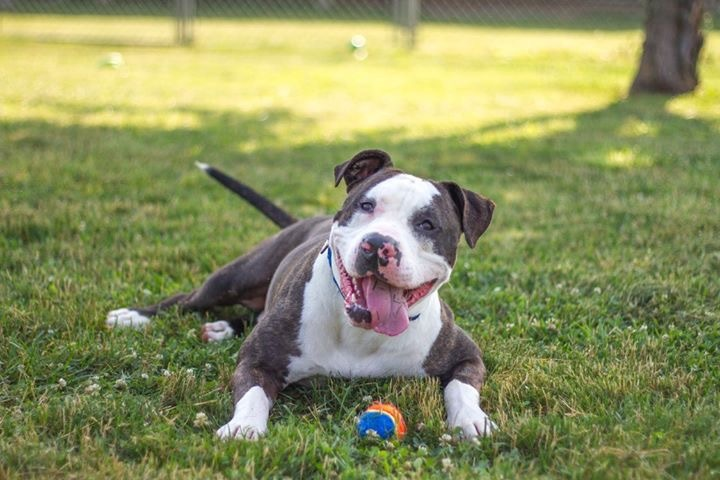 Tyson likes bossy female dogs! 3