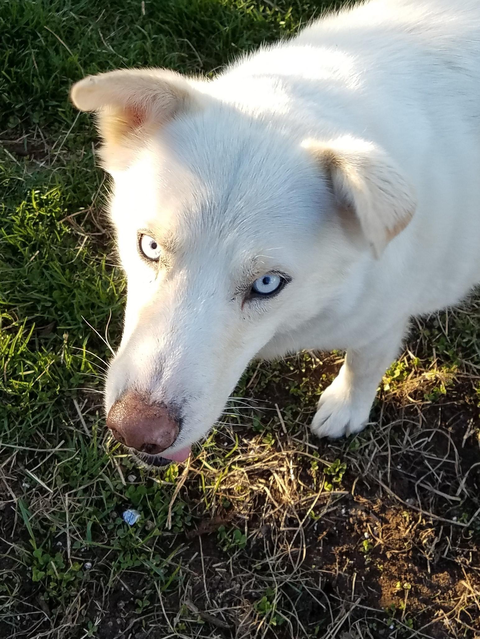 Old Blue Eyes - Frank