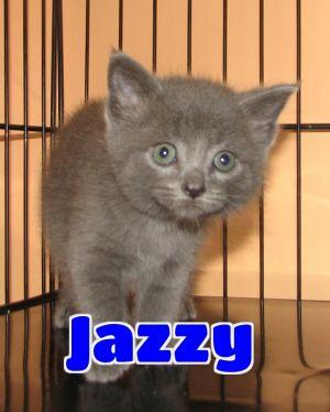#4396 Jazzy - sponsored