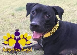 Preston is a staff and volunteer favorite and once you meet him youll see why This guy is a total