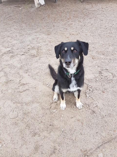 Dog for adoption - Spooky Trevor, a Labrador Retriever Mix