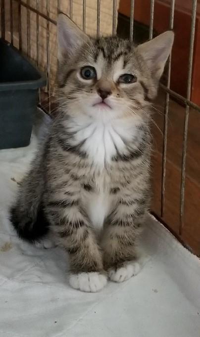 kittens-Bainy, Boudicca and Bram 2