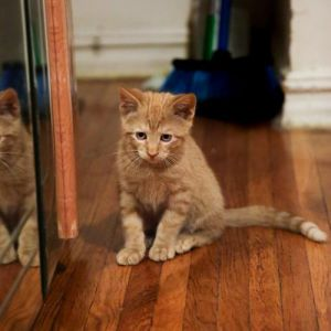 Hector and Helge: Happy, Healthy Kittens!