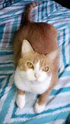 Tabby Cat: Bella
