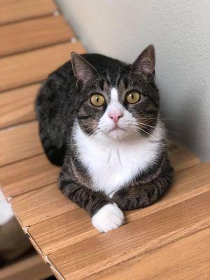 Simon! Colony Cat!