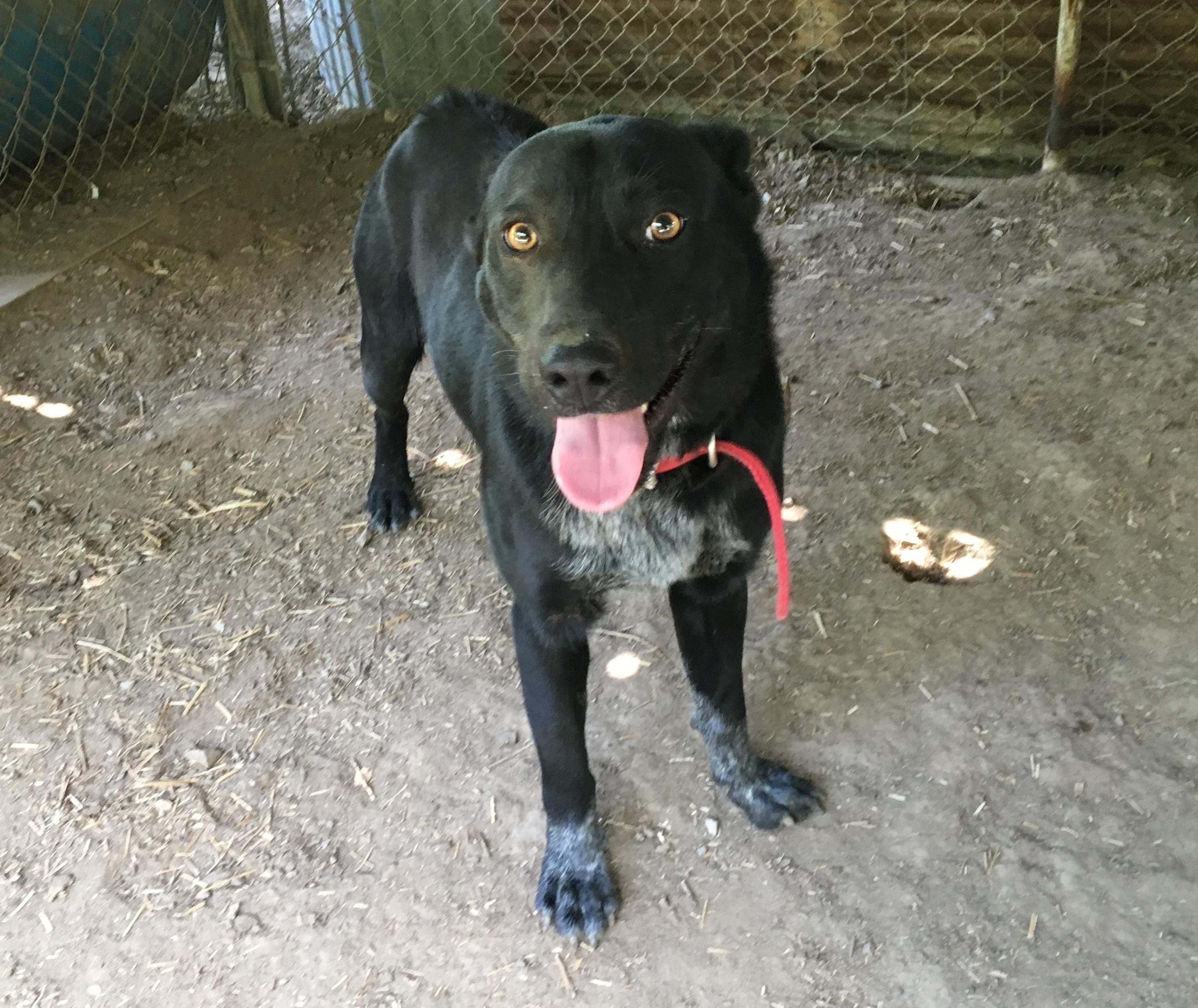 Dogs For Adoption Near Boaz Al Petfinder