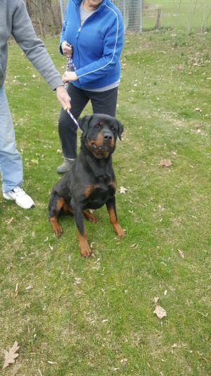 Dog For Adoption Jonas Near Sunbury Oh Petfinder