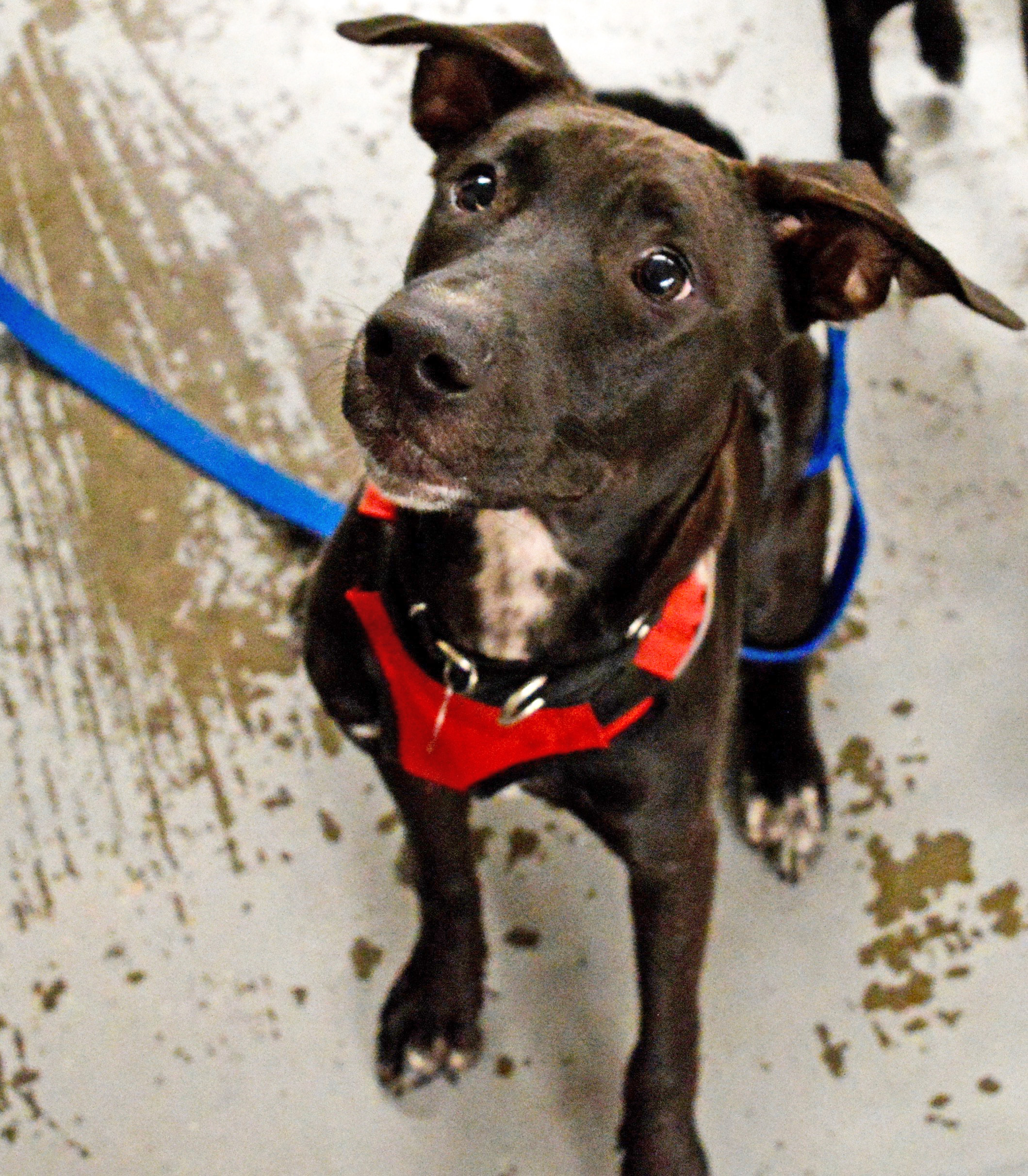 dog adoption charlotte