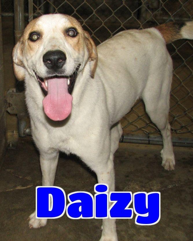 Daizy -sponsored