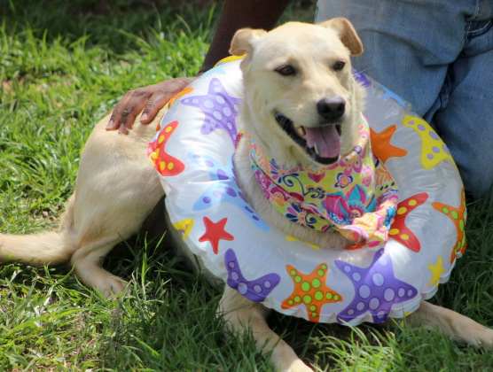 "Nifty ""NOVA"" !!!, an adopted Labrador Retriever Mix in Reston, VA"