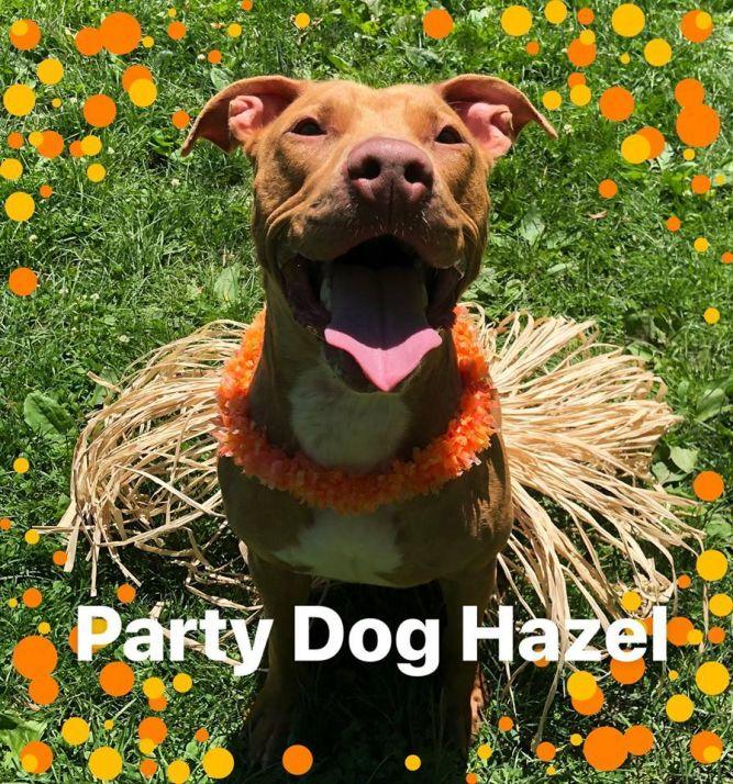 Hazel