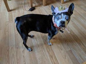 dog for adoption roxy jt near huntington beach ca petfinder
