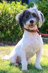 Bearded Collie Dog: Atef