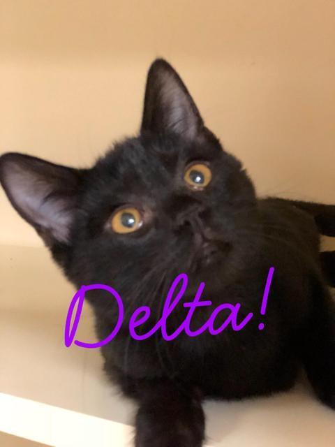 Delta - young!