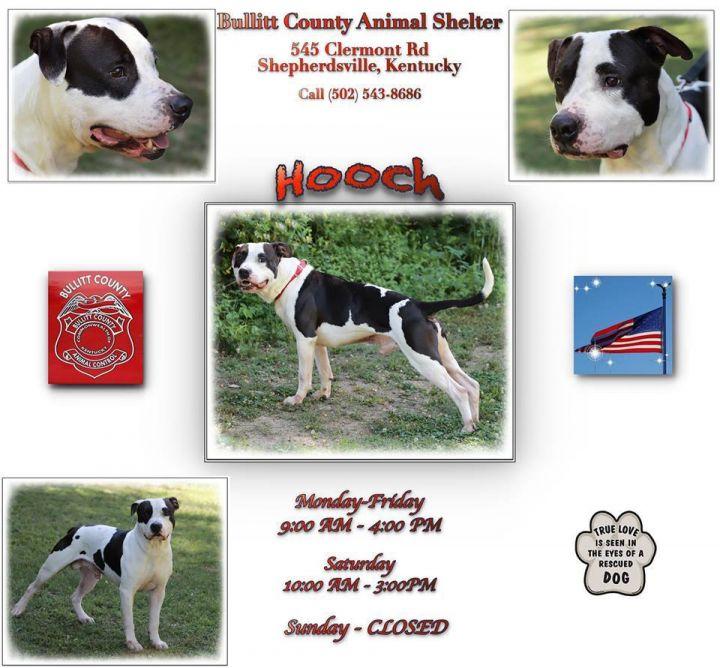 Hooch 2